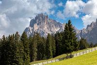 On Seiser Alm, Alpe di Siusi, with a view of Langkofel mountain, Sassolungo, South Tyrol