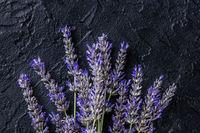 Lavender flowers in bloom, lavandula plants, overhead shot on black