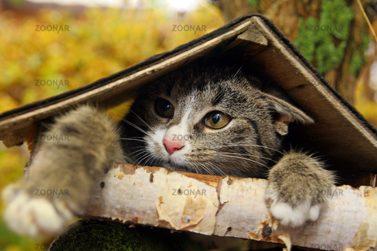 The cat in the birdhouse