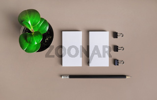 Business cards, pencil and plant