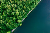 Green forest and water aerial top view, copy space