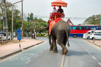 Tourist riders on elephant on city road