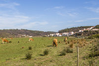 Odeceixe with horses on a meadow, Algarve, Portugal