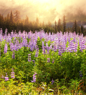 Meadow on Alaska