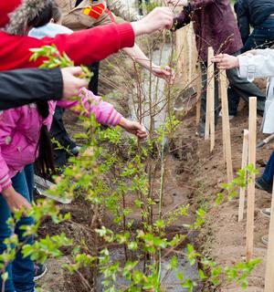 spring trees planting