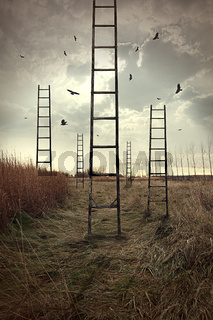 Ladders reaching to the sky in a autumn field