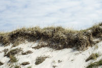 Dunes at the Baltic Sea 001