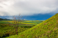 After rain in the Central Bohemian Uplands, Czech Republic.
