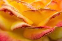 Closeup shot of yellow orange flower petals