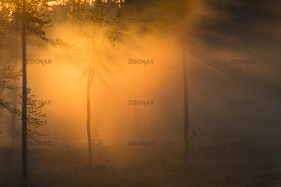 foggy mood, Stubba nature reserve, Sweden