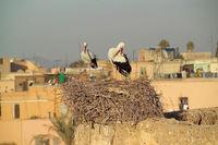 stork couple