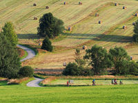Group of riders riding bicycles trought a rural landscape