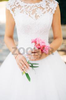 Oleander flower in the girl's hands