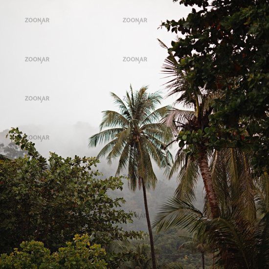Jungle Under Rain
