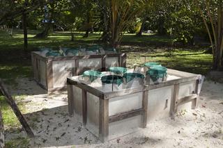 Schildkroeten Aufzuchtstation, Papua Neuguinea