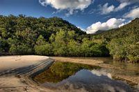 Tropical riverbank