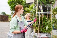 Gärtnerei Team kontrolliert Blumen Lieferung