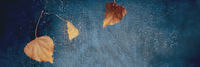 Autumn rain panorama, abstract background with raindrops