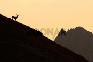 Outline of red deer standing on mountains in sunset
