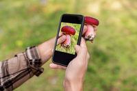 hands using smartphone app to identify mushroom