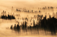 Tranquil nature scenery with trees peeking out of fog and casting long shadows