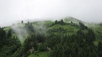 Fog creeping along green mountain meadows.