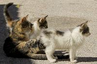 curious cat family