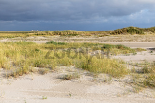Dünenvegetation am Strand von Sankt Peter-Ording