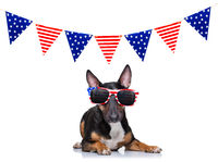 independence day 4th of july dog