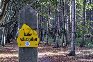 Der Rügener ' Märchenwald '.