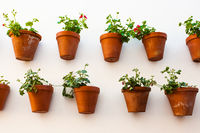 Flowerpots on the wall in Cordoba