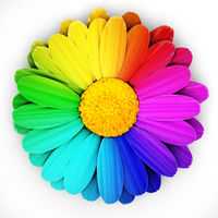 Multi colored daisies isolated on white background. 3D illustration