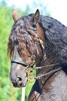 Beautiful powerful draft horse