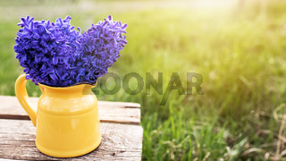 Bright blue-purple hyacinth flowers in yellow vase on old wooden table in garden