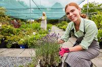 Junge Floristin in der Ausbildung mit Lavendel Pflanze