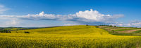 Spring rapeseed yellow blooming fields panoramic view, blue sky with clouds in sunlight. Natural seasonal, good weather, climate, eco, farming, countryside beauty concept.
