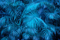 tropical  backgound - blue palm tree leaf pattern