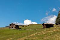 Horses on Seiser Alm, Alpe di Siusi, South Tyrol