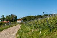 Small chapel in vineyard, St. Gallus Chapel, Canton Thurgau, Switzerland