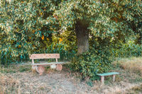 Small wooden bench, resting place under the tree