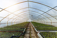 Horticulture industry concept with millions of seedlings in pots. Greenhouse for growing plants and flowers