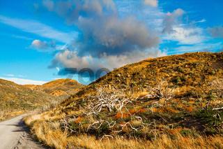 The Patagonia. Dirt road