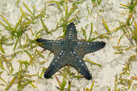 Colorful green and orange starfish on wet sand