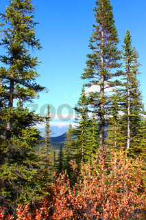 Canadian Forest Scenery