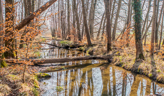 Naturnaher Auwald bei Salem-Wespach