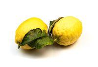 Amalfi lemons on white background