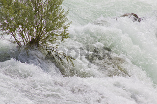 Am Rheinfall bei Schaffhausen