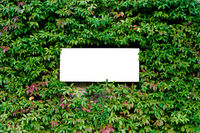 Flat lay white sheet of paper on green leaves. Blank sheet with copy space. Paper card mockup on green leaves