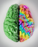 3D illustration representing two lobes of the human brain