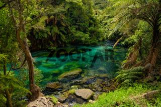 Blue Spring along Te Waihou Walkway in Hamilton, Waikato, New Zealand